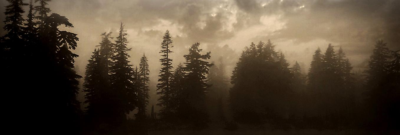 forest-schmal_Pixabay
